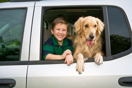 viajar-con-animales-en-coche