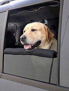 La mascota no debe viajar nunca en esta posición.