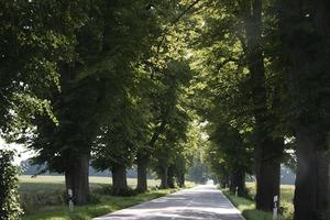 Una hilera de árboles capaces de reducir nuestra velocidad.