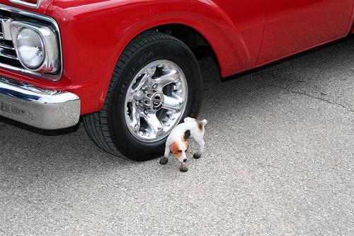 perro-rueda-coche
