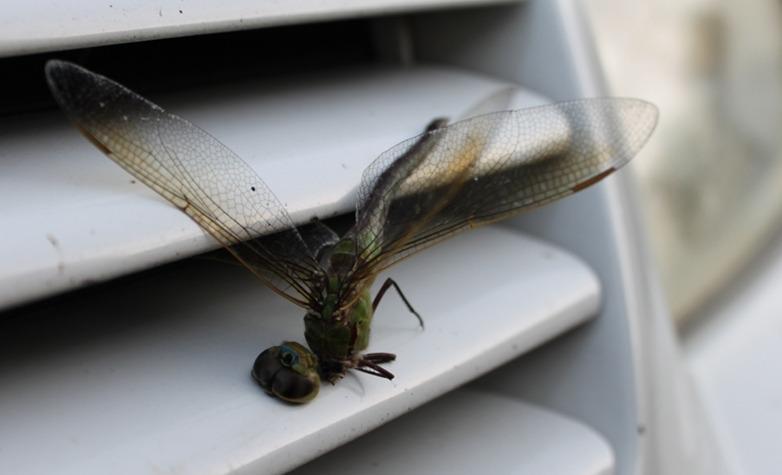 insectos_coche
