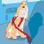 ARNÉS: Es una corra que se engancha al arnés del perro y, por otro lado al broche del cinturón de seguridad. En colisiones a poca velocidad son eficaces.