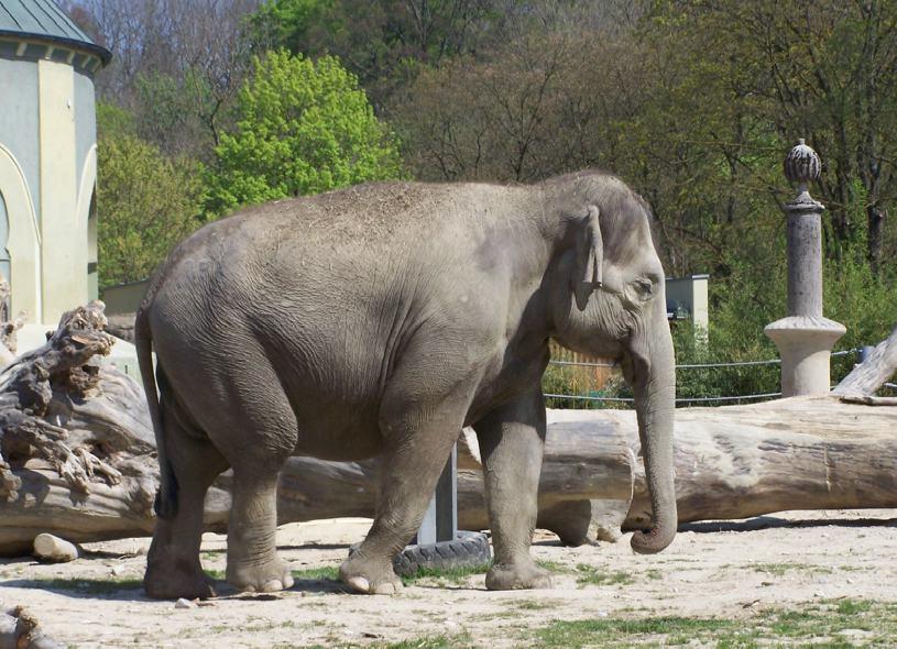 elefante_munich
