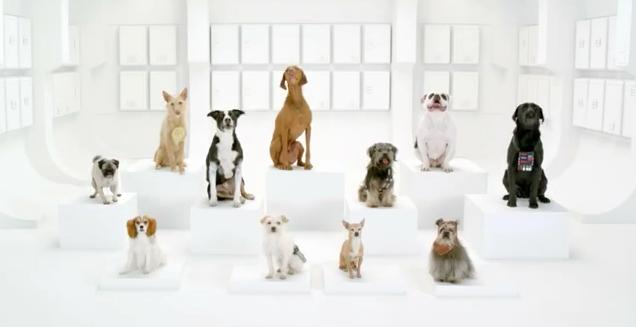 videos perros volkswagen