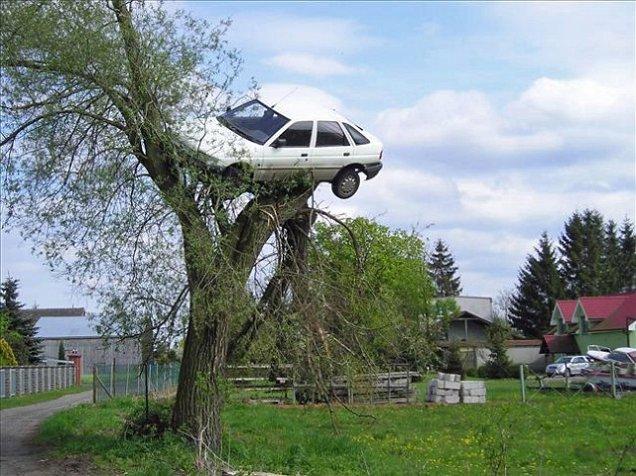 coche arbol polonia