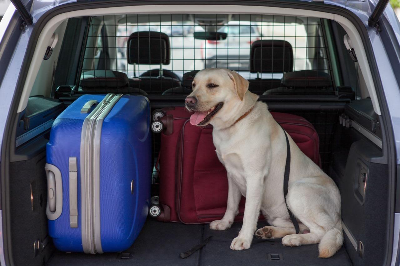 viajar perro coche – 5