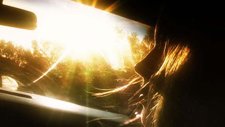 sol parabrisas
