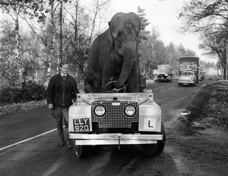 Kam_elefante_Land_Rover_noviembre_1959