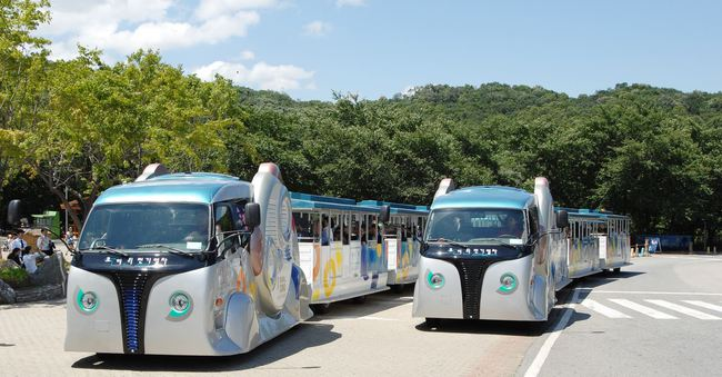 buses OLEV