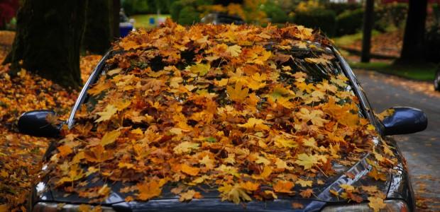 Volvo hojas arboles caidas