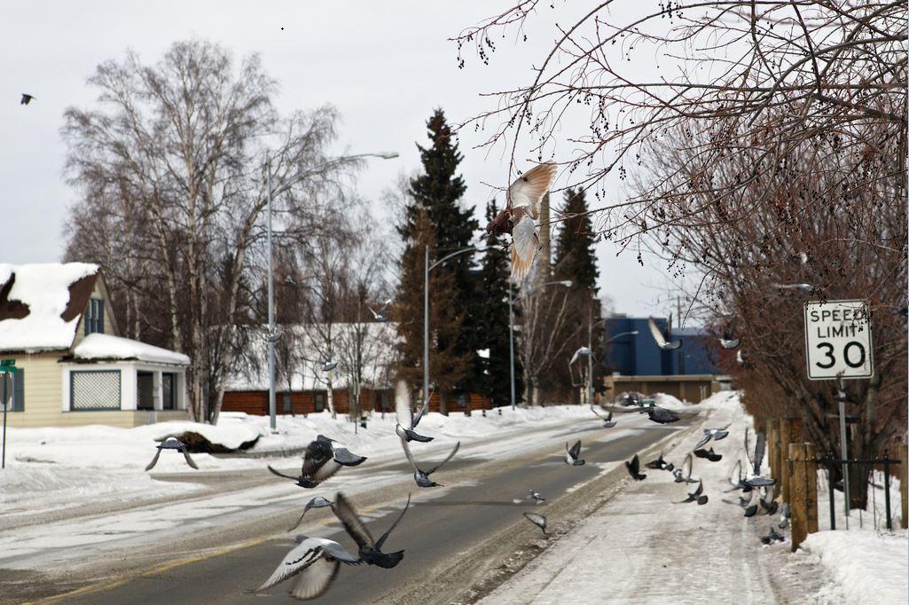 pájaros límite velocidad 3