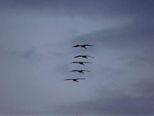 pájaros límite velocidad 4