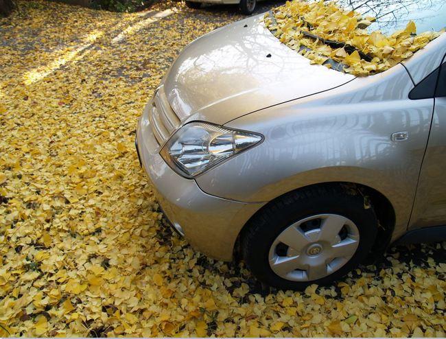 conducción otoño 2