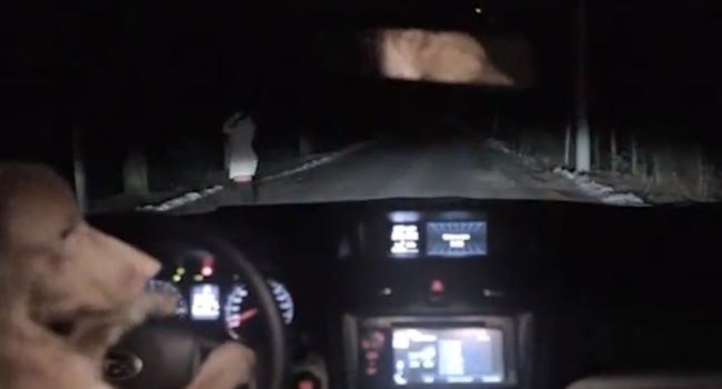 Subaru XV perro rusia