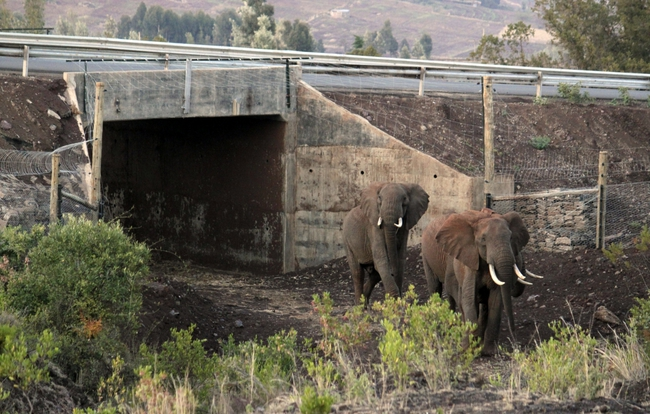 ElephantTunnel_big