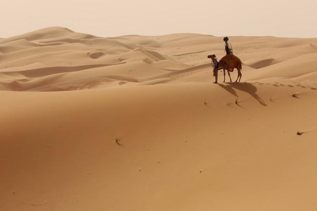 camello google maps