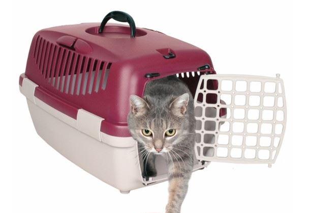 gato trasportin