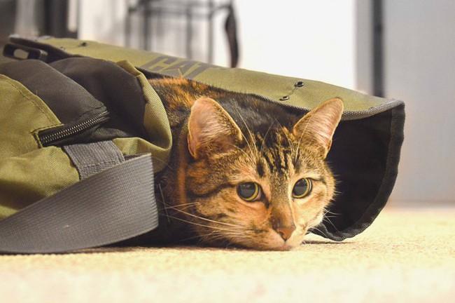 gatos-viajar-mareos