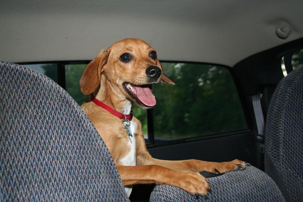 transporte mascotas