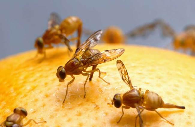 usos CO2- matar insectos