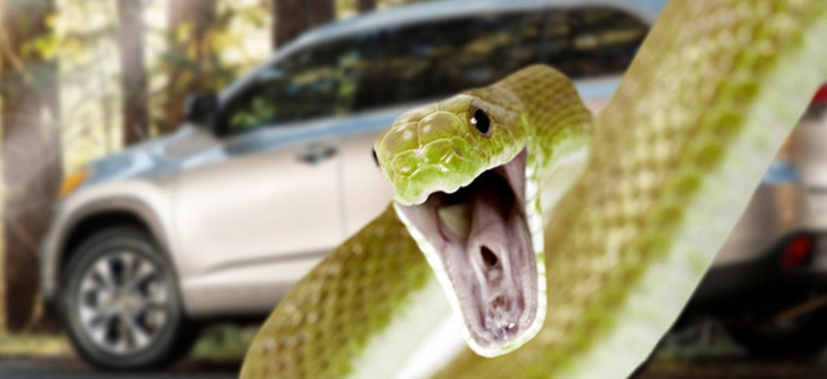 Serpiente Coche 06