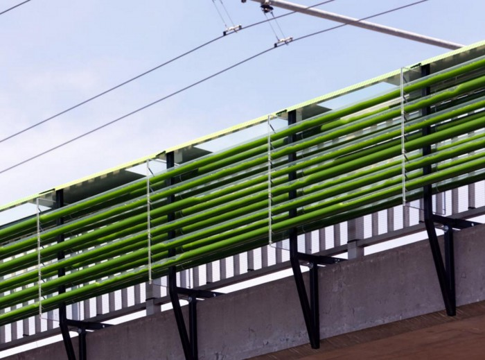 puente-algas (2)