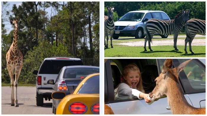 Safari autoservicio