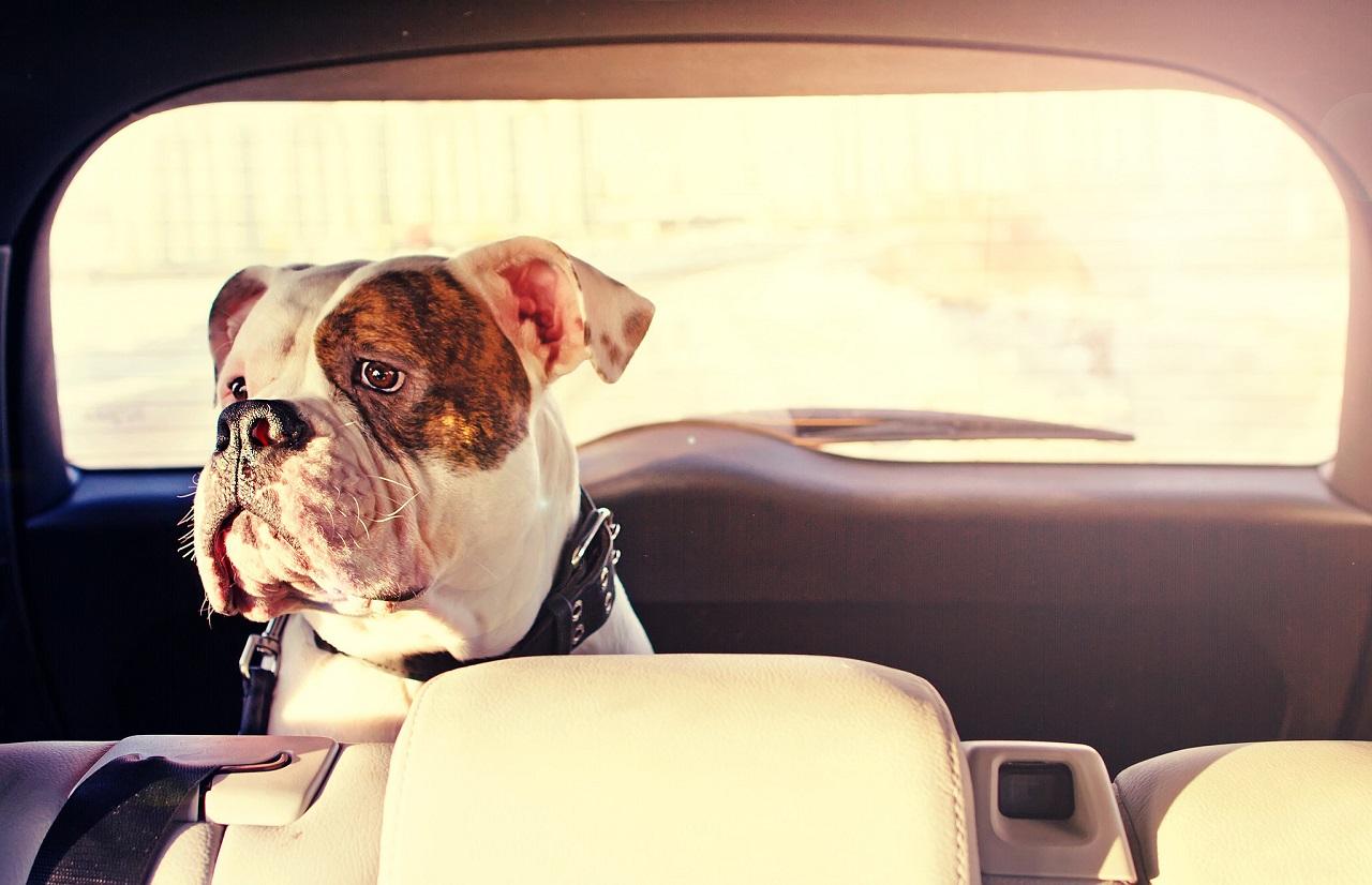Evitar el gole de calor en animales verano
