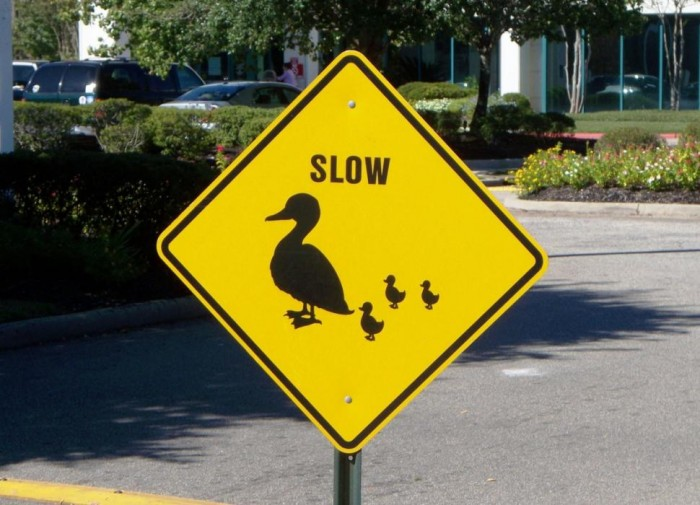 Señal tráfico peligro patitos