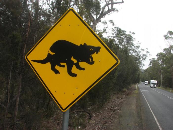 peligro diablo tasmania