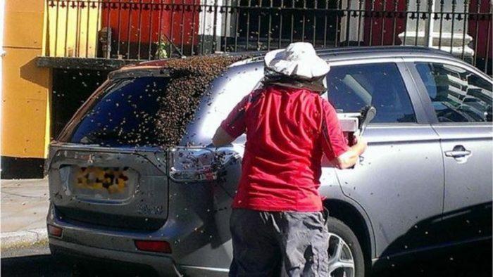 abejas siguen a un coche 3