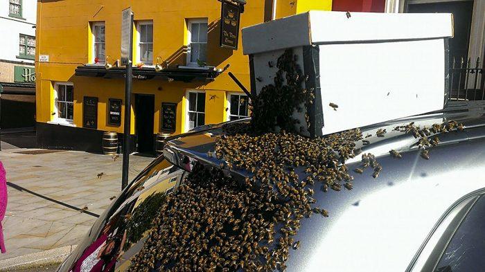 abejas siguen a un coche