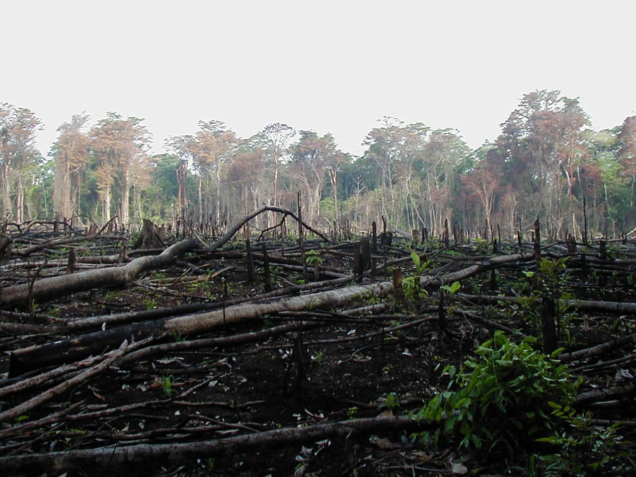 deforestación-Wikimedia