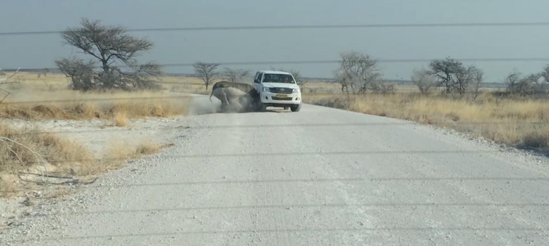 Rinoceronte ataca todoterreno con turistas dentro