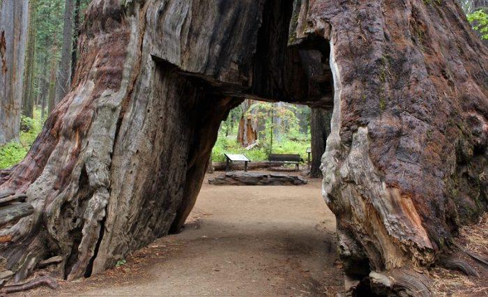 secuoya-túnel octubre de 2016