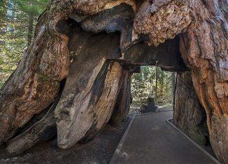 secuoya-túnel de California