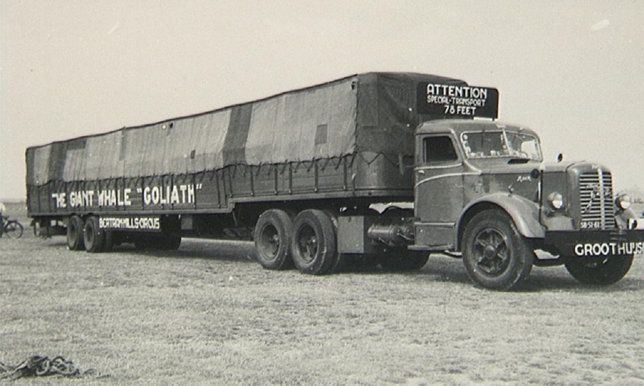 camión con ballena