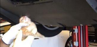 Un gato es retirado de la parte baja de un Tesla en un taller