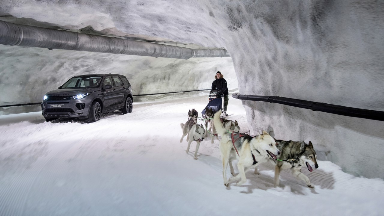 land-rover-discovery-sport-trineo-perros 2