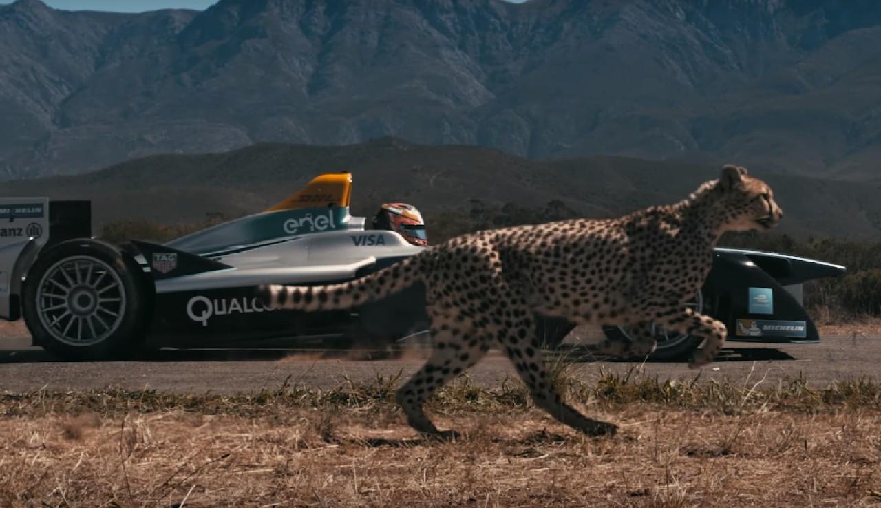formula-e-guepardo