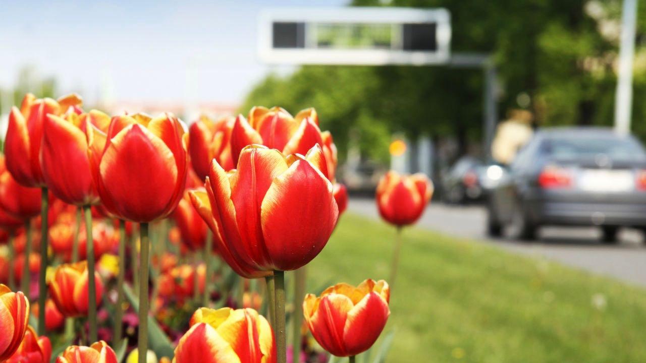 coche primavera