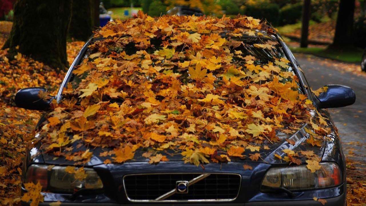 Volvo-hojas-arboles-caidas