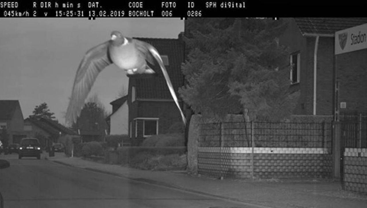 paloma radar de velocidad