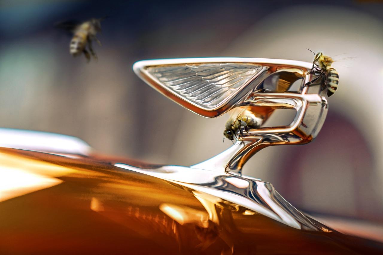 Bentley abejas miel – 1