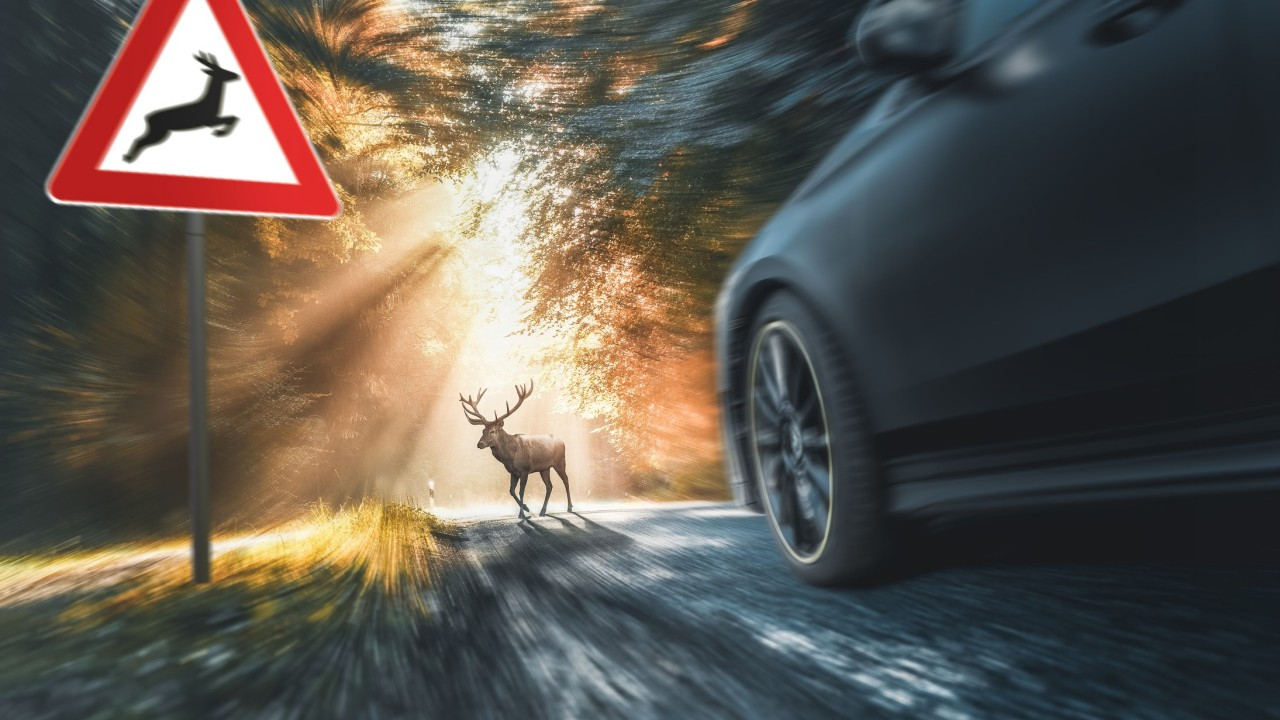 deer crosses a country road