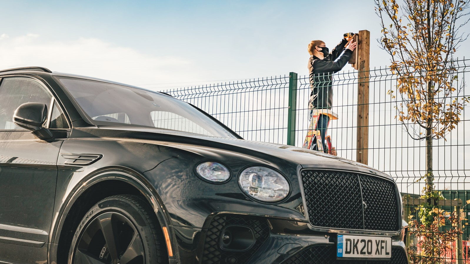 Bentley casas para pajaros y murcielagos